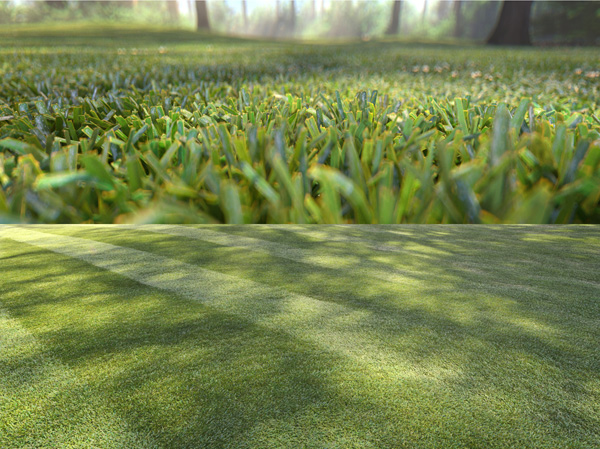 Cinema4d MultiInstances Grass MarijnRaeven