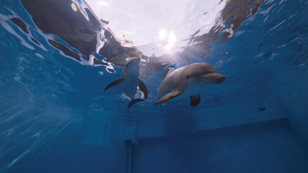 Spin-vfx-dolphin-tale14