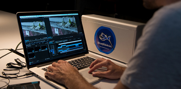 Bluefish444 workflows postproduction