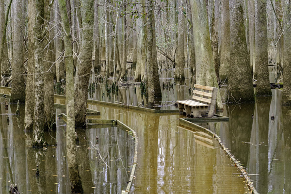 LaCie national parks Congaree
