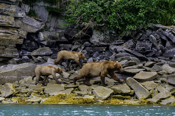 LaCie national parks Katmai